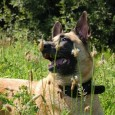 Wenn Sie Ihren Hund mit in den Urlaub nach Österreich nehmen möchten sollten Sie die Einreisebestimmungen für dieses Land kennen. Denn nur so ist gewährleistet, dass Sie an der Grenze […]
